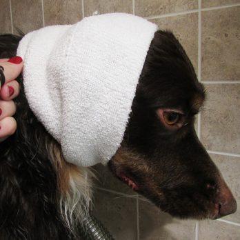 Happy Hoodies – 'קפוצ'ון' לכיסוי אוזני הכלבים גם בזמן היבוש