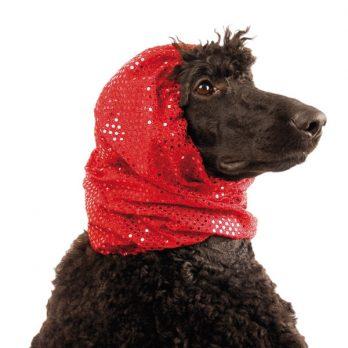 Show Tech – כיסוי והגנה לאוזני הכלב פנסי