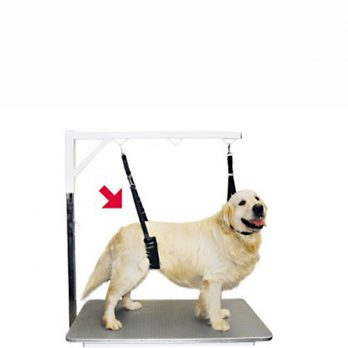 Show Tech – רצועת ריסון לכלב עם נוחות