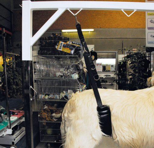 Show Tech - רצועת ריסון לכלב עם נוחות