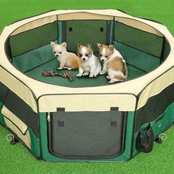 מלונת בד – מגרש משחקים לגורים ולכלבים קטנים
