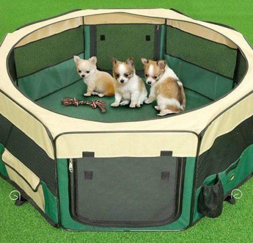 מלונת בד - מגרש משחקים לגורים ולכלבים קטנים
