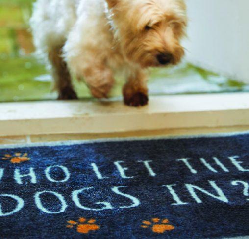 Howler & Scratch DOGS IN 2 - מחצלת 50X75