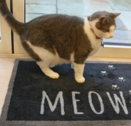 Howler & Scratch MEOW 1 - מחצלת חתולים 50X75