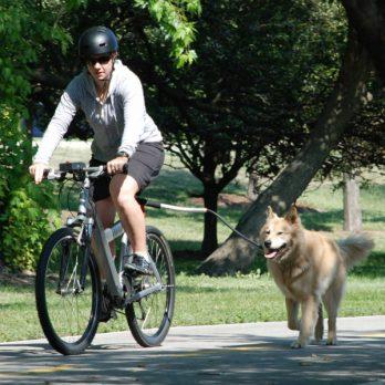 PetEgo – רצועה לאופניים אוניברסליים Cycleash