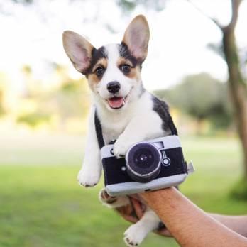 Pet Play – צעצוע בד בצורת מצלמה – ECO Play Globetrotter Collection Camera