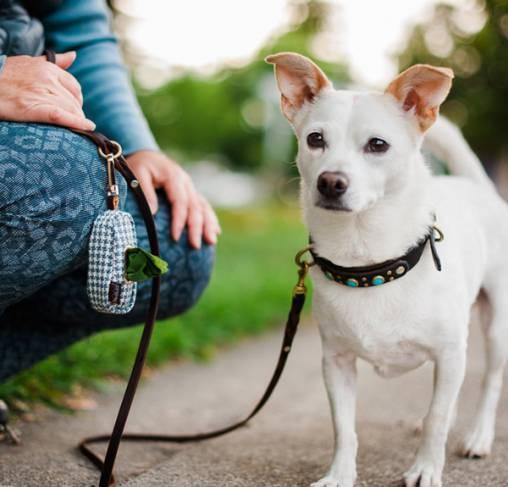 P.L.A.Y - נרתיק נשיאה לשקיות צרכים - Proper Pup Poop Bag Dispenser - Light Blue