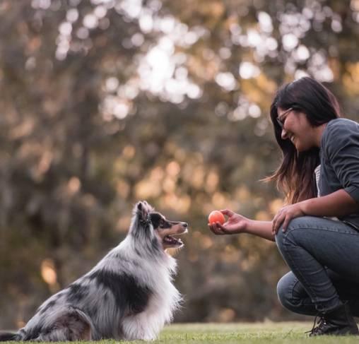 Pet Play - צעצוע כדור קופץ וצף כתום - ECO Play ZoomieRex IncrediBall Orange