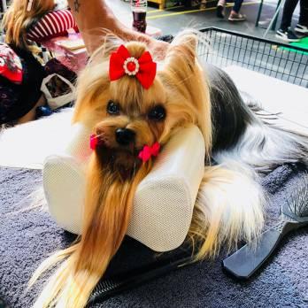Show Tech – כרית נוחות לטיפוח הכלב Comfy Groom Pillow For Top Knot