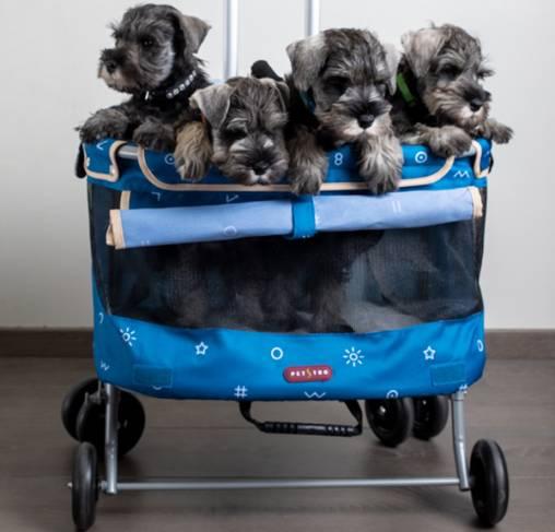 Petstro Mini Buggy- עגלת מיני לכלבים