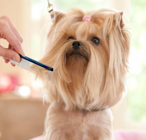 Plush Puppy - מסרק 11.8 50/50