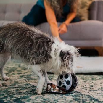 Pet Play – צעצוע בד בצורת סליל סרט – ECO Play Cinema Collection